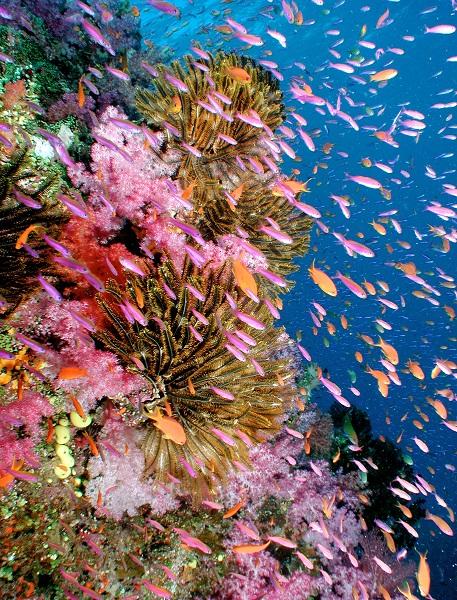 4_5_Kaldewei_Ocean_Habitat.jpg
